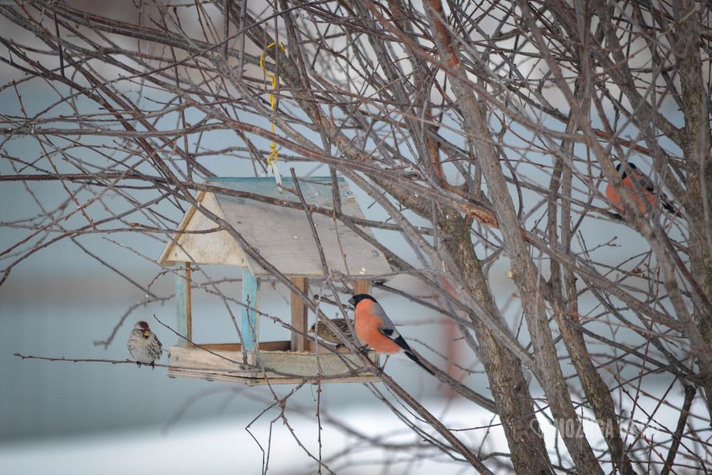Кормушка с птицами